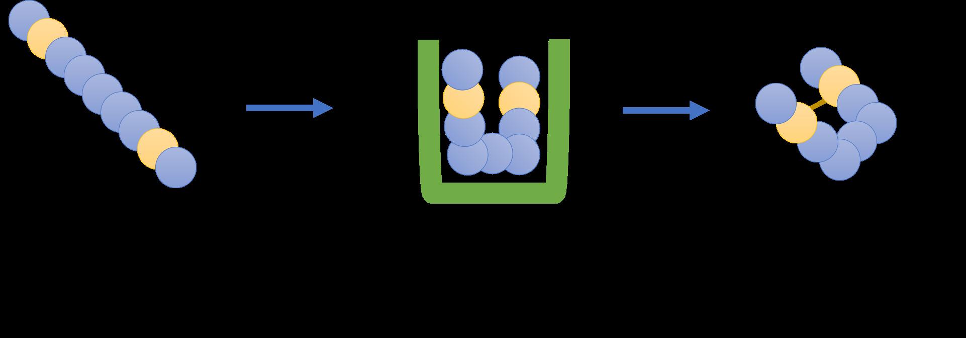 ポリペプチド鎖がシャペロンによって折り畳まれ、フォールディングする様子。