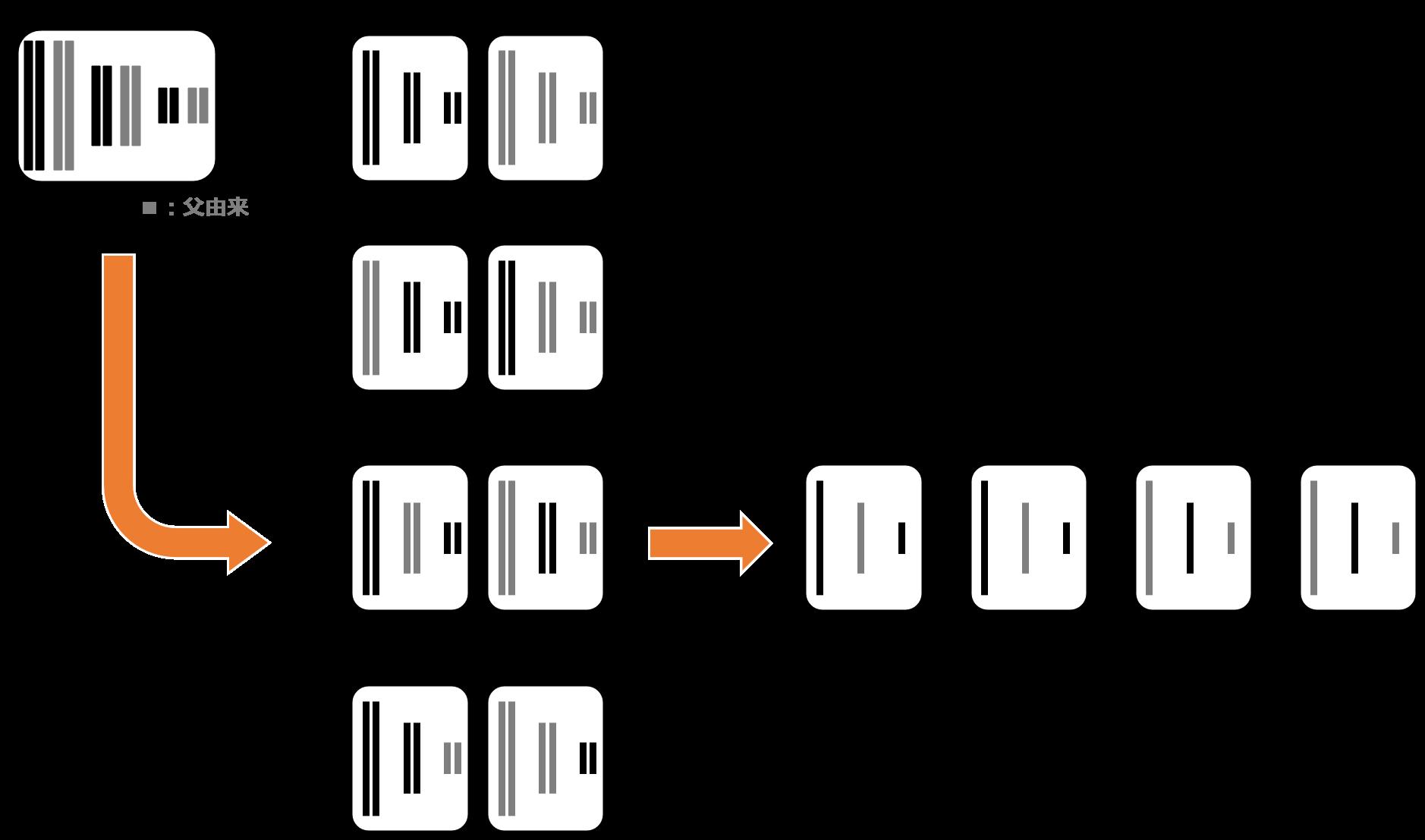 1つの一次精母細胞からの減数分裂(第一分裂)