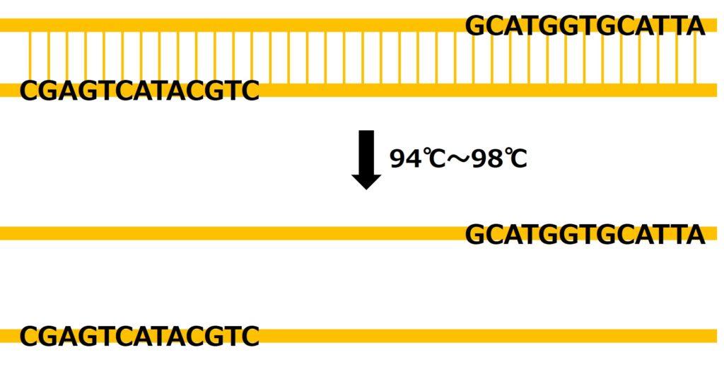 2本鎖DNAは高温で1本鎖DNAに解離する