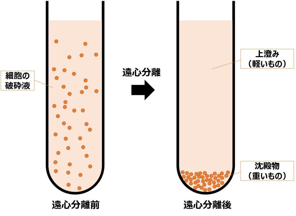 遠心分離の概略図