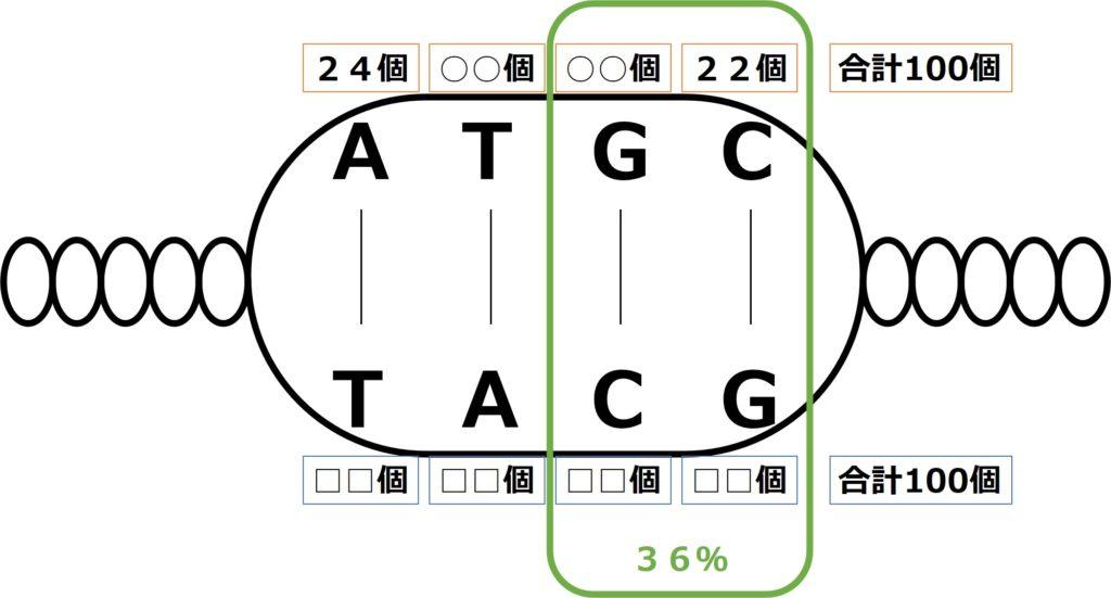 GとCの合計が36%。一方の鎖のCが22%でAが24%
