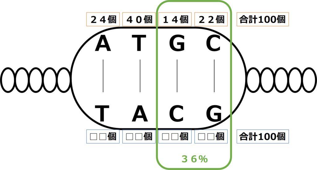 GとCが36%であることからGが14%となり、Tは残りの40%。