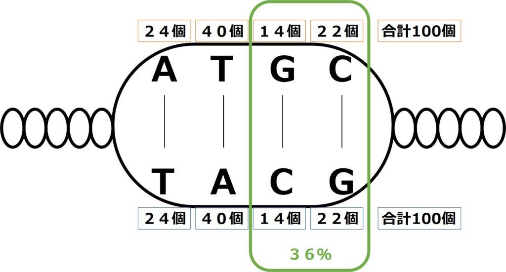 塩基の相補性を用いてもう一方の1本鎖DNAの塩基数を求める