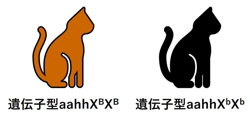 茶色の体毛のネコと黒色の体毛のネコ