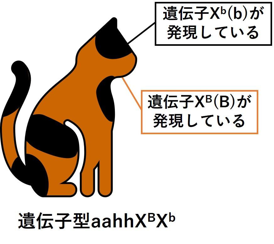 茶と黒のまだらのネコ