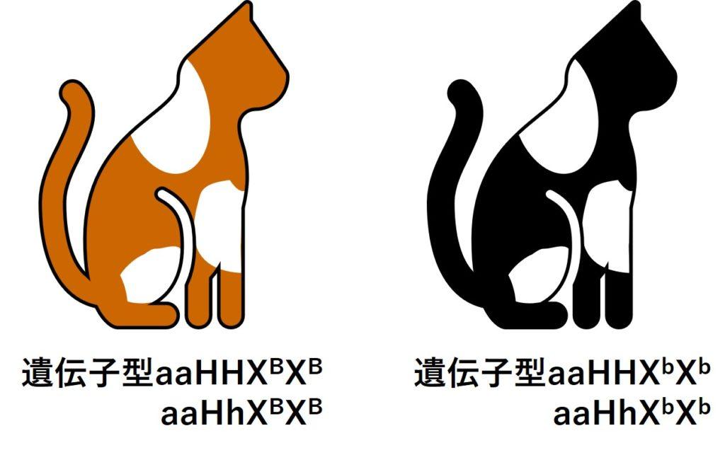 茶と白まだらのネコ、黒と白まだらのネコ